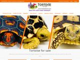 Tortoise Town | Tortoise for sale